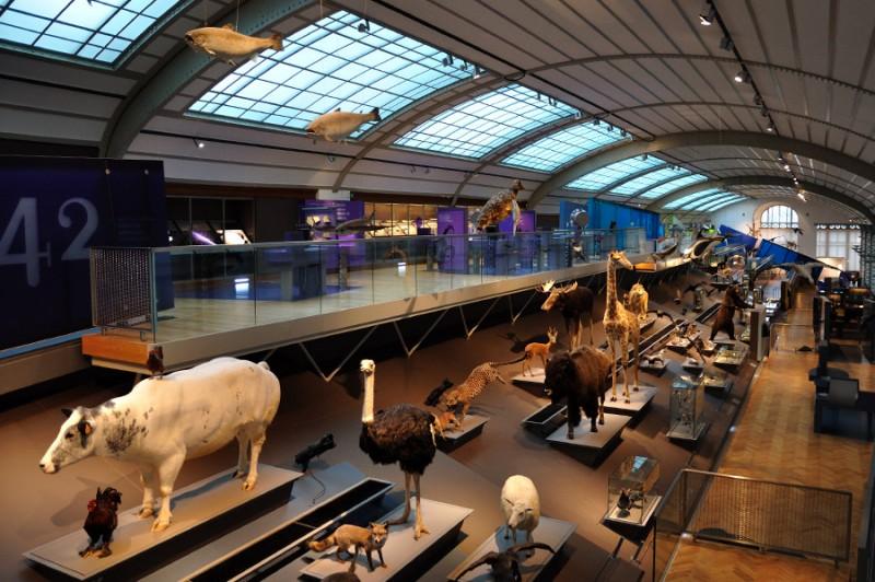 alquiler de coches pepecar museo de ciencias