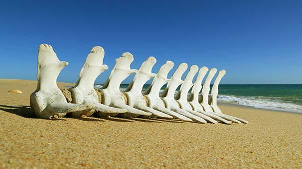 alquiler de coches con pepecar - playa tavira